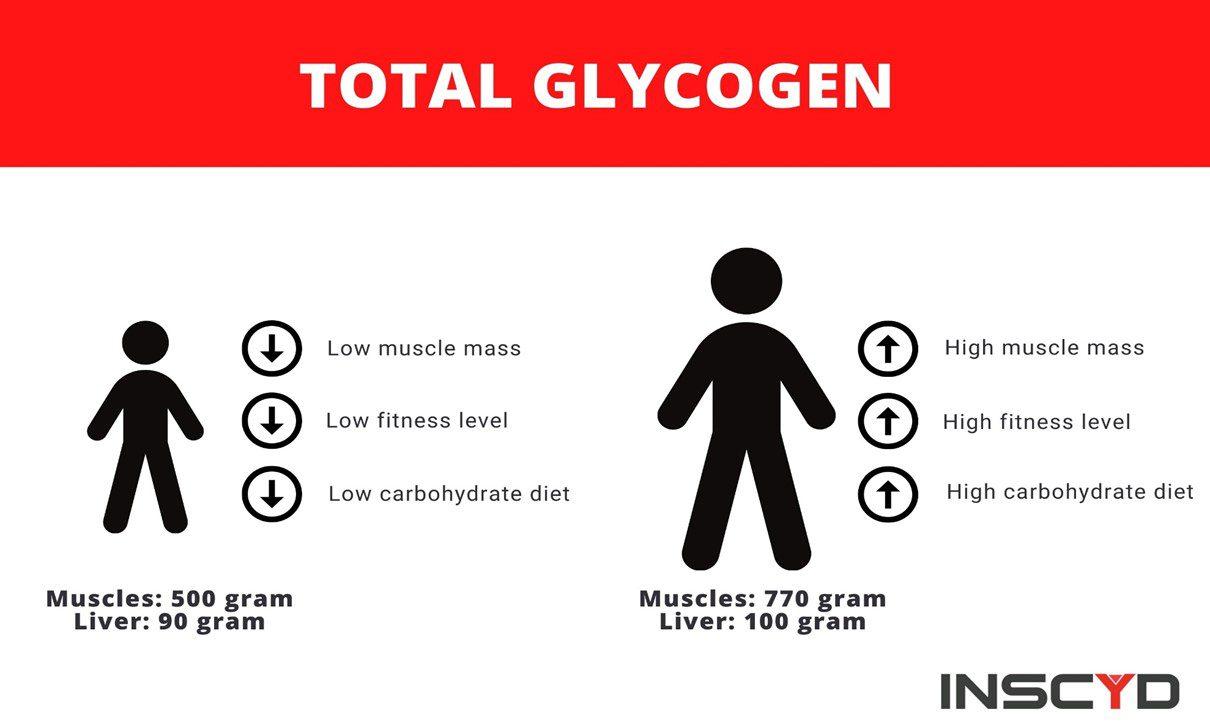 Infographic: total glycogen content when exercising.